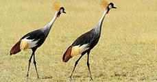 10 kép - a szavanna állatai