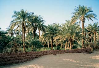Oázis az afrikai Szaharában