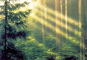 A fény terjedése