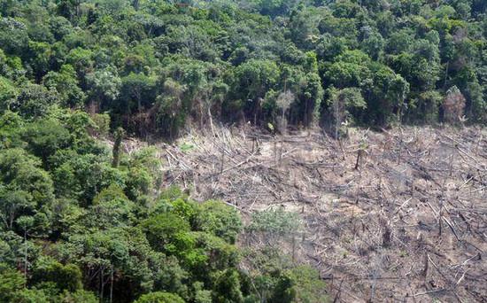 Kiirtott esőerdő
