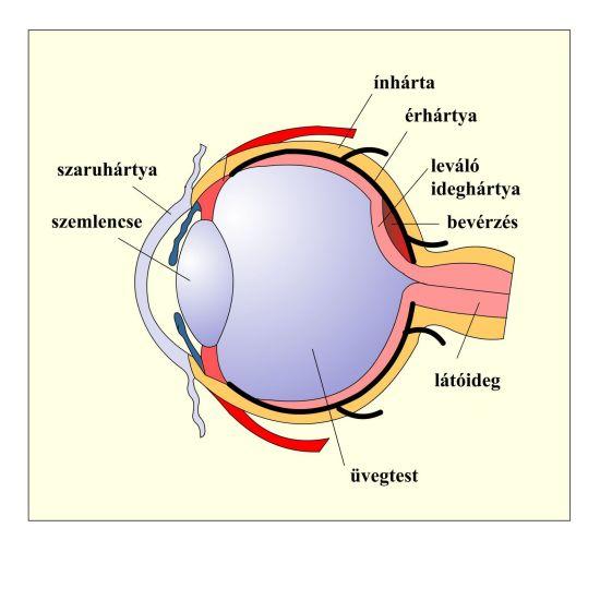 Emberi látás és kezelés