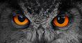 10 kép - sokszínű állatvilág