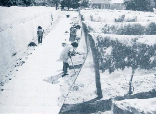 Szőlőművelés az alföldön