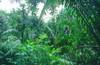 A trópusi Távol-Kelet