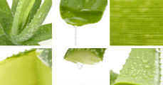 Gyógyhatású növény