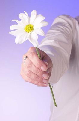 Egy virág szára