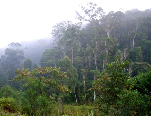 Az esőerdő