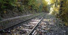 Új erdei vasút
