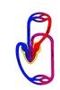 A kétéltűek keringési rendszerének vázlata (a nyilak a vér áramlási irányát jelzik)