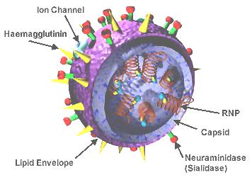 3D_Influenza_virus