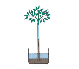 A levelek párologtatásának hatása a vízfelvételre