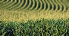 Mezőgazdaság és klímaváltozás