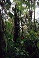 Esőerdő belseje