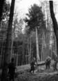 A Soproni Tanulmányi Erdőgazdaságban