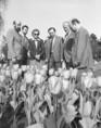 A holland királynő ajándékba hozott tulipánjai