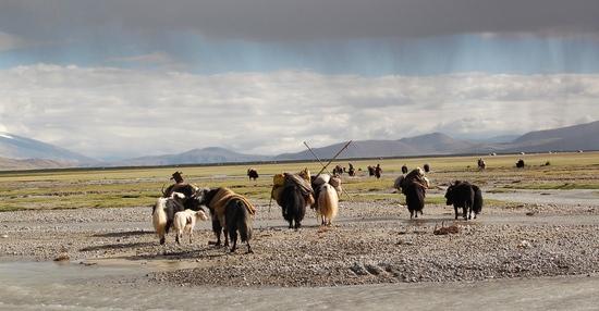 Tibeti nomád állattenyésztők