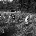 Munkálatok a Bükki Állami Erdőgazdaságban