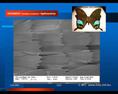 Új elektronmikroszkóppal egy lepke szárnyának százszoros nagyítása, a kép jobb sarkában a lepke