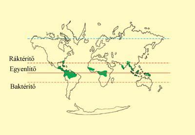 A trópusi esőerdők elhelyezkedése a Földön