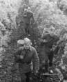 Szovjet katonák segítenek szüretelni Etyeken