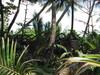 Fa a dzsungelben