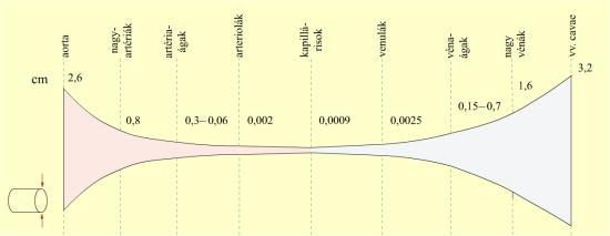 Az egyes értípusok átmérője