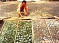 Sok gomba termett a Zemplénben