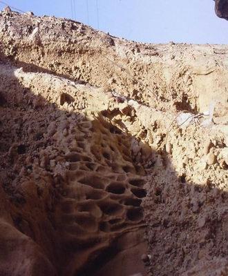 Meszes homokkő