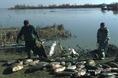 Haltetemek kihúzása a Tiszából