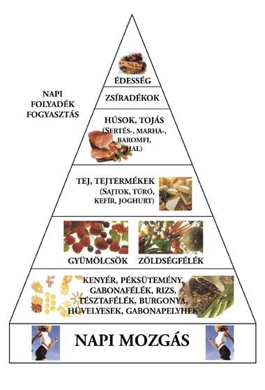 Táplálkozási piramis - Sulinet Hírmagazin