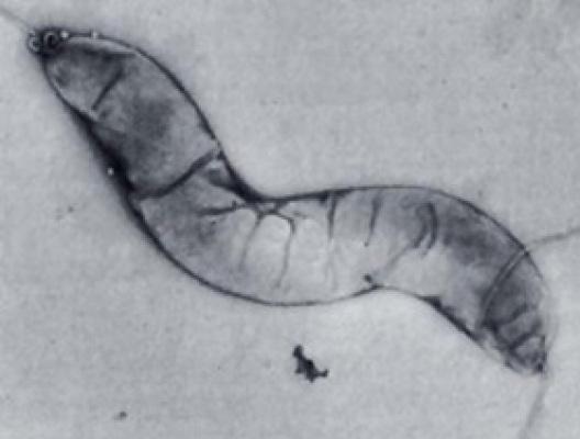 Mikroorganizmus