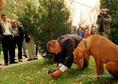 Szarvasgomba-kereső kutyaverseny