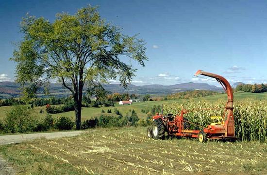 Munkaeszköz az aratáshoz