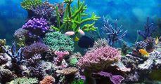 Mi lesz a korallokkal?