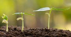 Biztosíték a vad növényfajok túlélésére