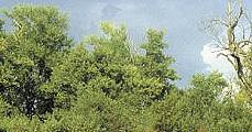 Munkacsoport az erdősztyeppékért