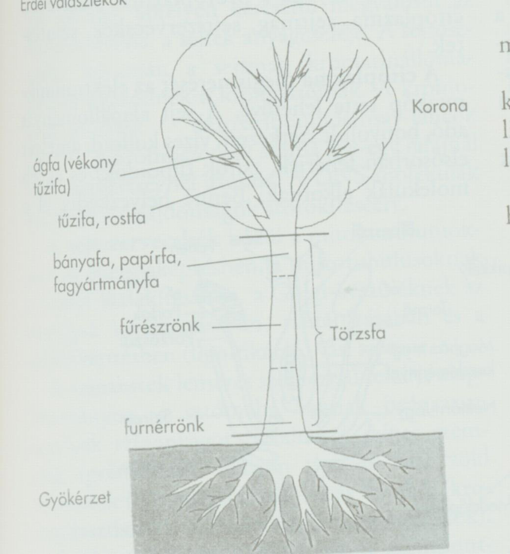 Erdei fák felismerése