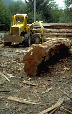 Őserdő pusztítása