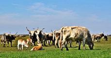 A pásztorkodás