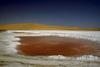 Sótűrő baktériumok élőhelye