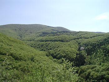 A Bükk-hegység erdővel borított hegyoldalai