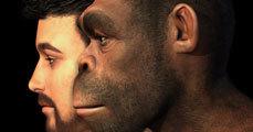 Az ember evolúciója 2. rész vagy A legősibb emberelődök
