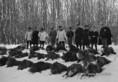 Vaddisznó-vadászat a Gemenci erdőben