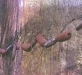 A Csulmun-kultúra halászai hálónehezékként hornyolt kavicsokat használtak
