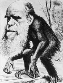 Darwin mint majom