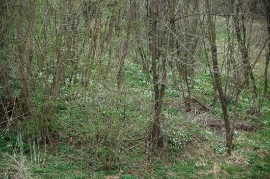 Természet védelmi terület
