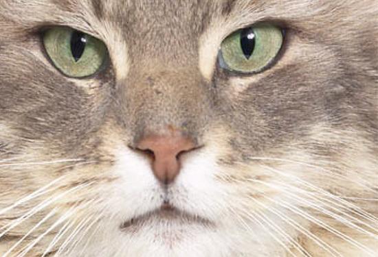 Macska orra