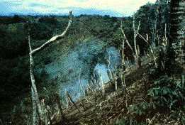 Égetéses földművelés Pápua Új-Guineában