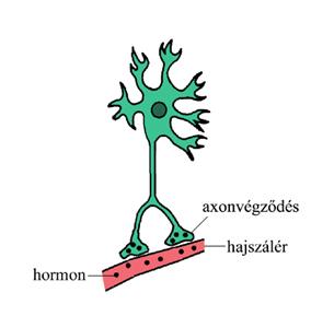 Neuroszekréciós sejt