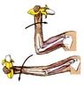 A csontok mozgatása
